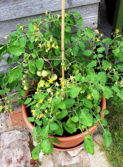 summerharvest2