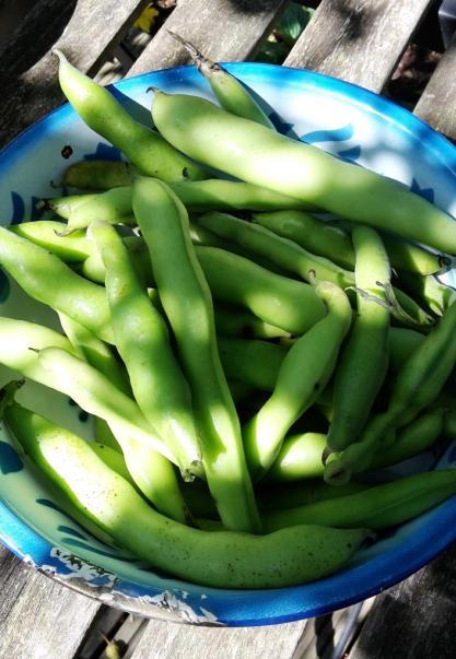 summerharvest3